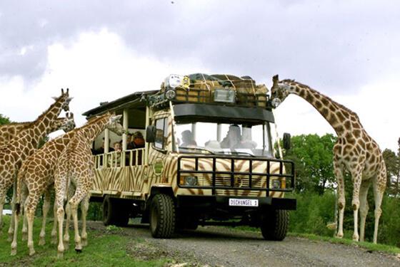 Giraffen © Serengeti Park